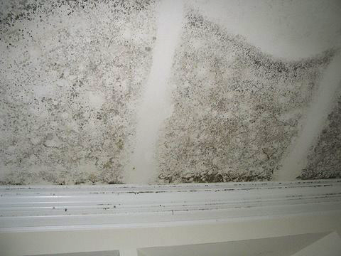 Mold growth inside the framed wall resulting from a flooded basement.